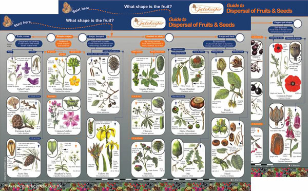 Key to Identifying Dispersal of Fruits & Seeds