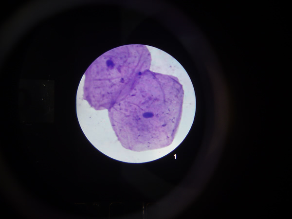 Microslide Cells Of Your Body (PK15)