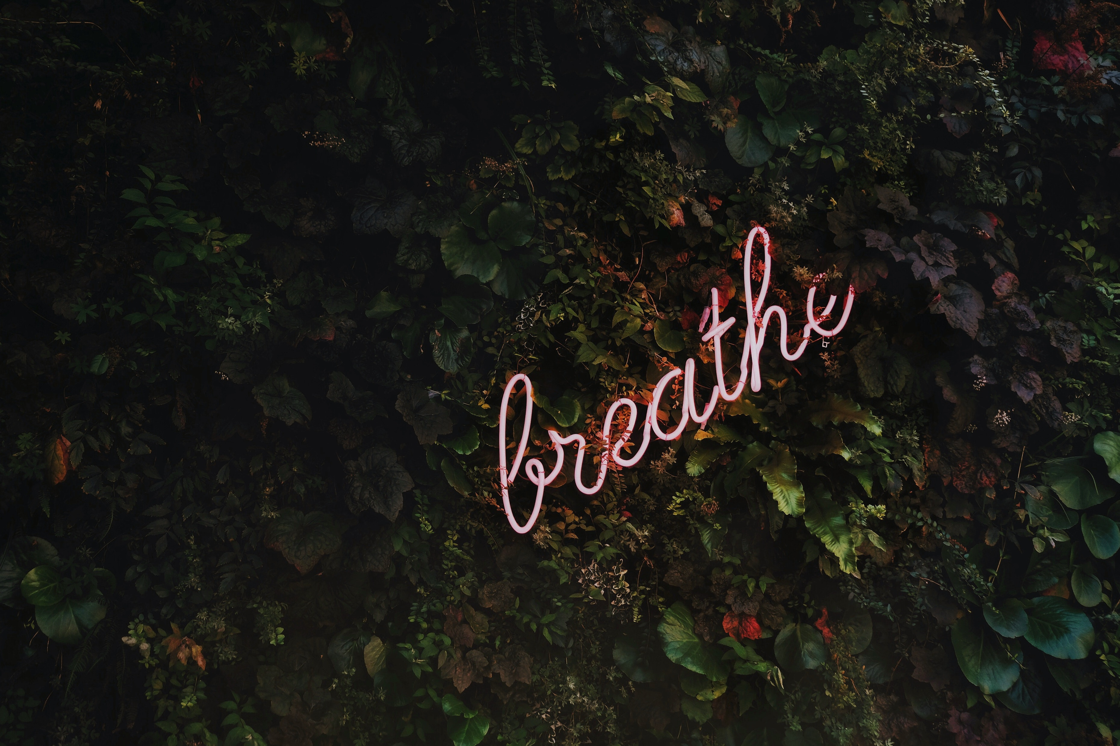 breathe meditate and relax