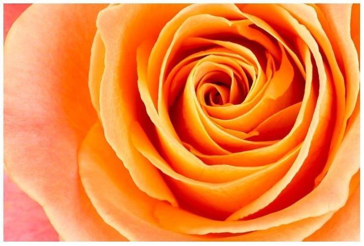 Roses Lagacy2