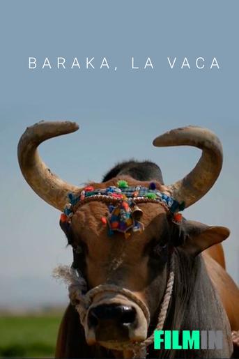 Baraka, la vaca