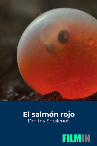 El salmón rojo