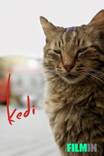 Kedi (Gats d'Istanbul)