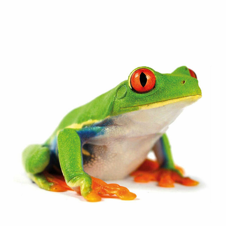 Green Motion Car Rental Frog 767x767