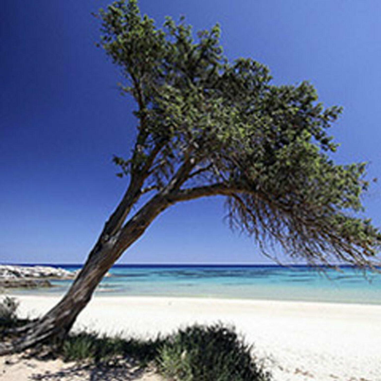 Chi non ha mai visitato il Sarrabus non può dire di conoscere la Sardegna 767x767