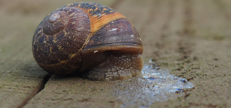 Snails leave a trail of slime behind them