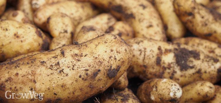 """Potatoes"""