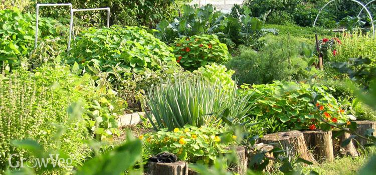 https://s3.eu-west-2.amazonaws.com/growinginteractive/blog/allelopathy-garden-2x.jpg