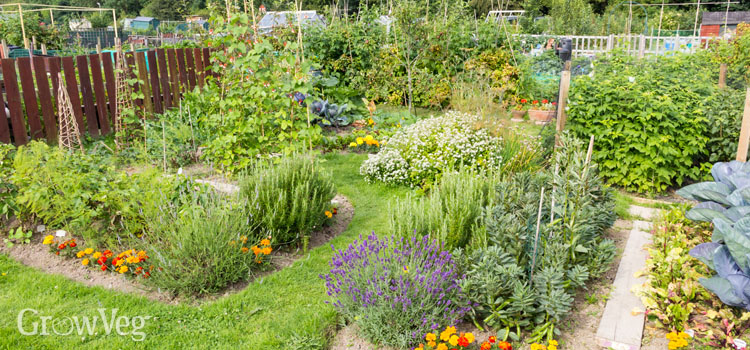 A well-planned vegetable garden