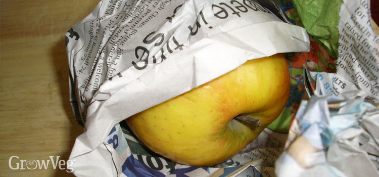 Storing apples in newspaper