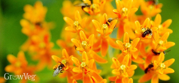 https://s3.eu-west-2.amazonaws.com/growinginteractive/blog/asclepias-2x_ohdxch.jpg