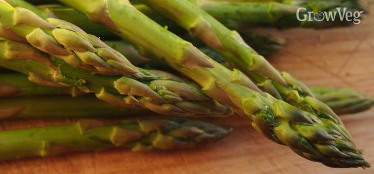 Harvested asparagus