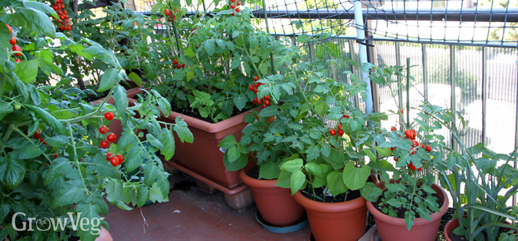 https://s3.eu-west-2.amazonaws.com/growinginteractive/blog/balcony-container-garden-2x.jpg