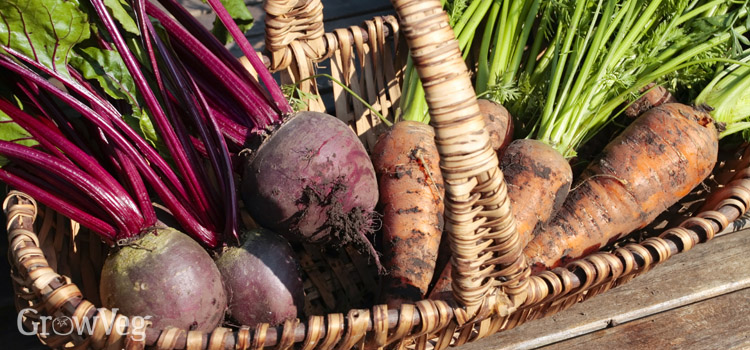 https://s3.eu-west-2.amazonaws.com/growinginteractive/blog/beets-and-carrots-2x.jpg