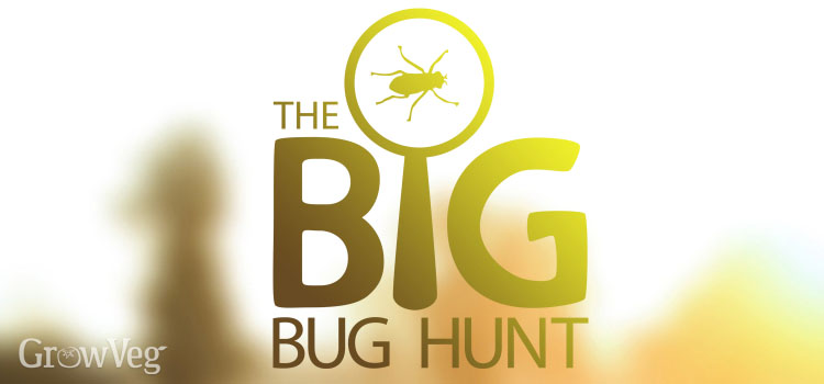 Big Bug Hunt logo