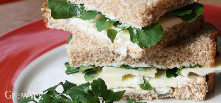 Bittercress sandwich