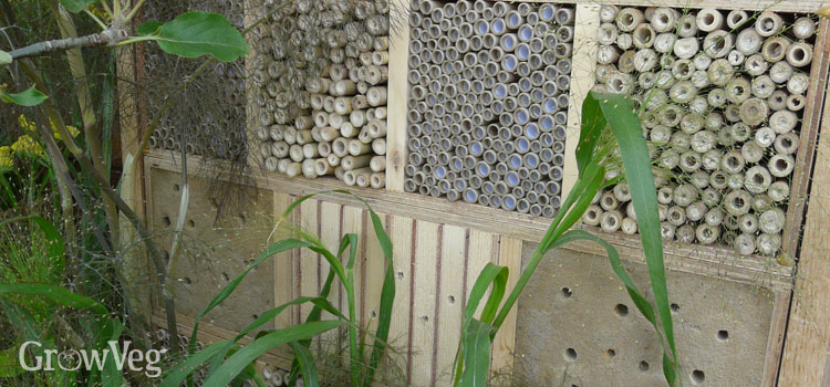 Encouraging beneficial insects into your vegetable garden by building a bug hotel