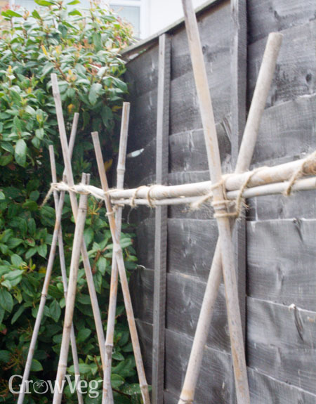 Bamboo canes for pea and bean support