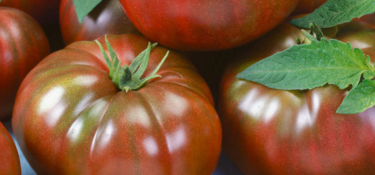 Tomato 'Chef's Choice Black', image courtesy of Totally Tomato