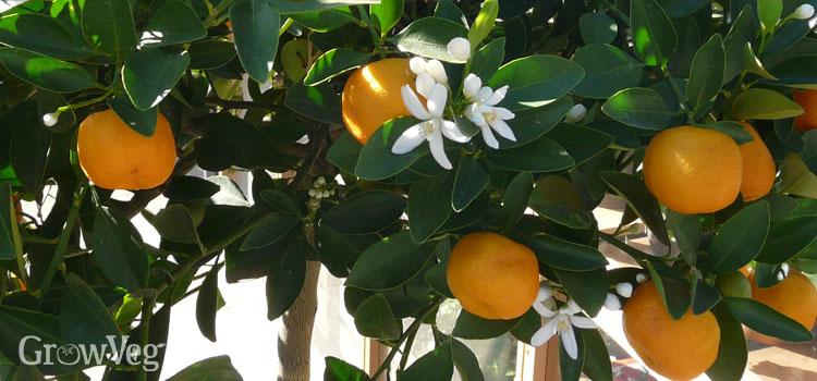 """""""Citrus"""