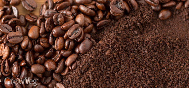 Coffee grounds and coffee beans