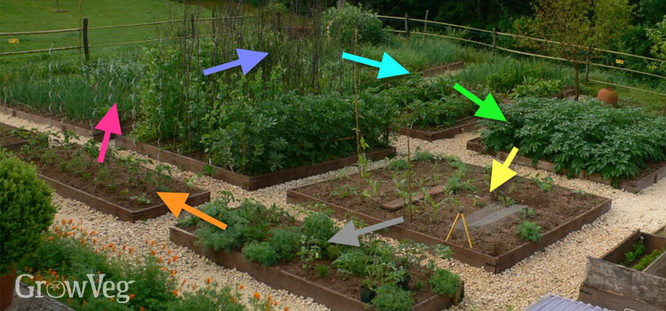 Crop rotation by family using colour groupings