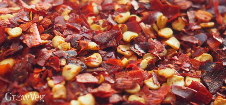 Dried pulverised chillies