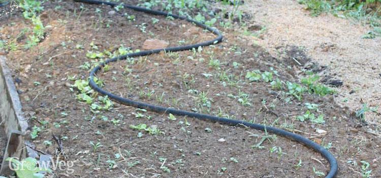 Drip hose