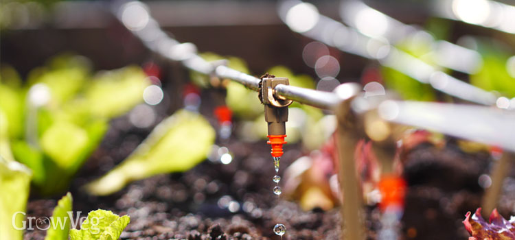 https://s3.eu-west-2.amazonaws.com/growinginteractive/blog/drip-irrigation-2x.jpg