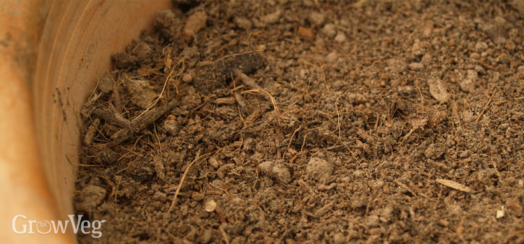 Dried out compost in a container