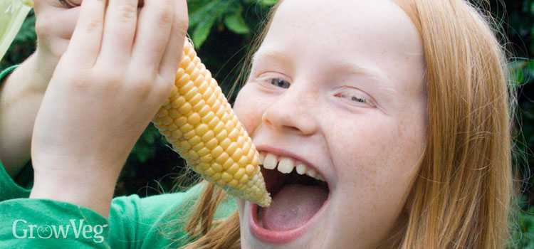 https://s3.eu-west-2.amazonaws.com/growinginteractive/blog/eating-sweetcorn-2x.jpg