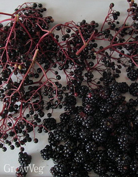 """Elderberries"