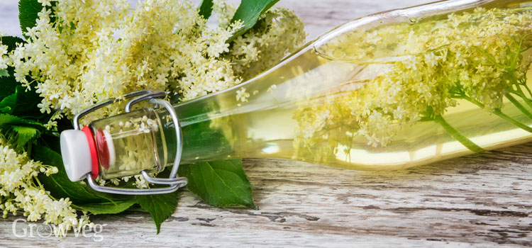 https://s3.eu-west-2.amazonaws.com/growinginteractive/blog/elderflower-cordial-2x.jpg