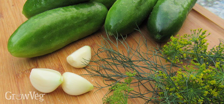 Making fermented dill pickles