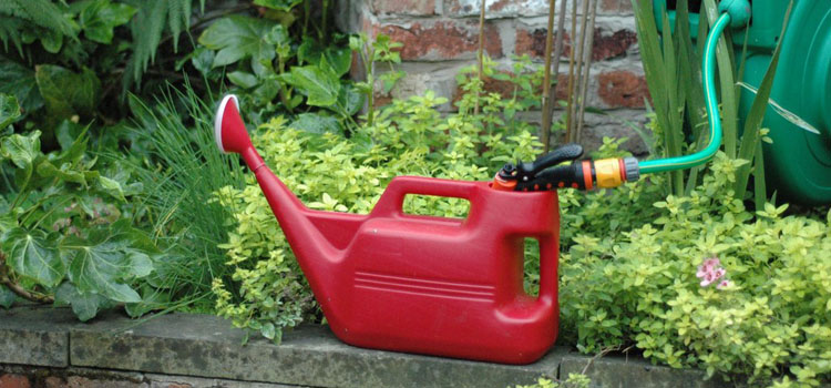Filling a watering can