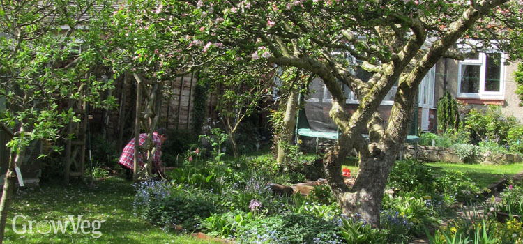Garden with fruit tree