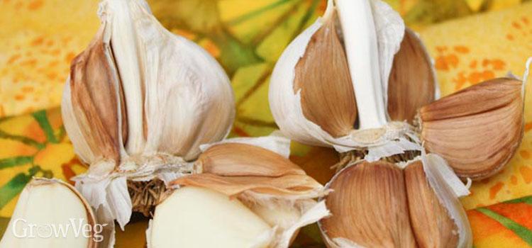 Broken garlic cloves
