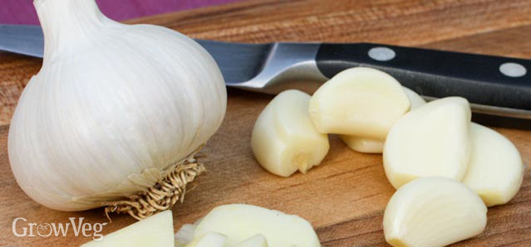 Homegrown garlic is more delicious than store bought