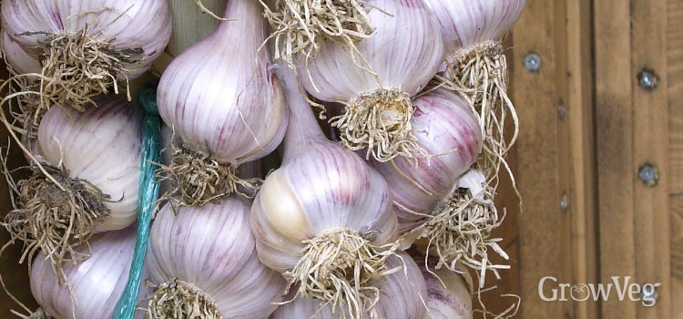 https://s3.eu-west-2.amazonaws.com/growinginteractive/blog/garlic-string-2x.jpg