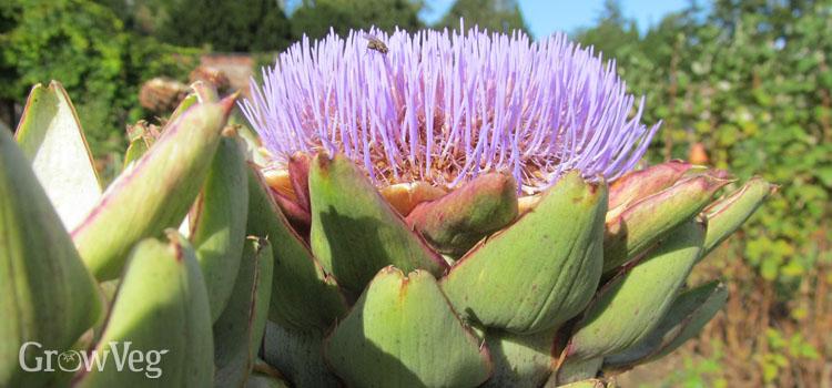 Great Reasons To Grow Edible Perennials
