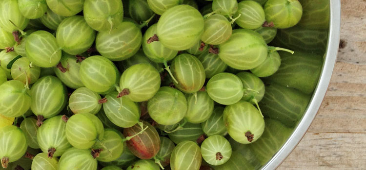 https://s3.eu-west-2.amazonaws.com/growinginteractive/blog/gooseberries-in-bowl-2x.jpg