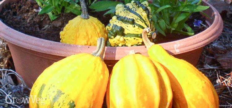 Harvesting ornamental hours