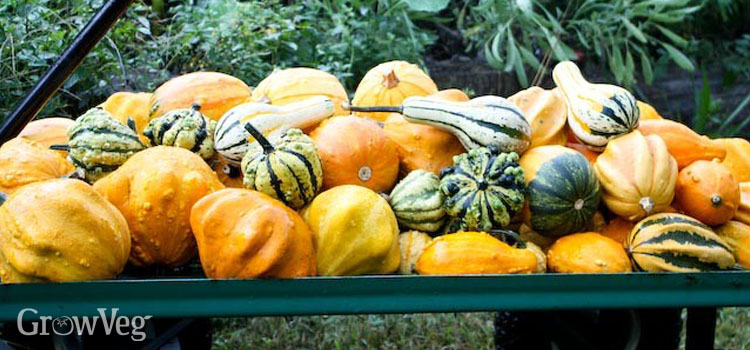 A display of ornamental gourds