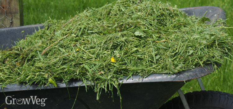 Collecting grass clippings for mulching vegetable beds