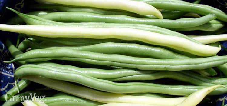 https://s3.eu-west-2.amazonaws.com/growinginteractive/blog/green-and-yellow-beans-2x.jpg