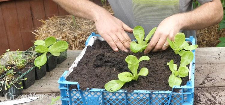 """Planting"