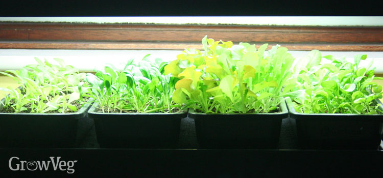 A grow light for raising seedlings in winter