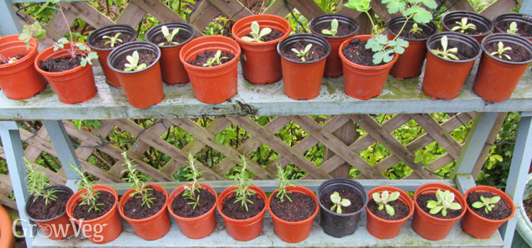 Hardening off vegetable seedlings