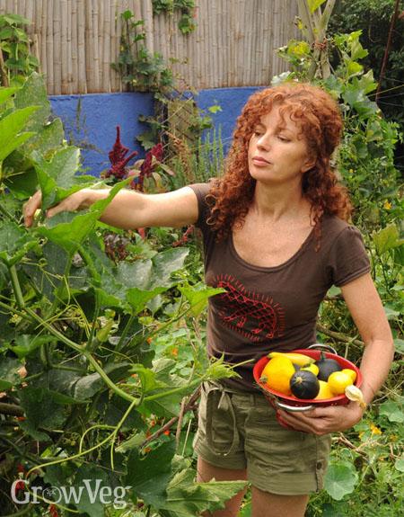 Jane Griffiths harvesting squash