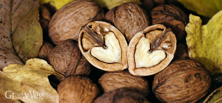 https://s3.eu-west-2.amazonaws.com/growinginteractive/blog/heart-shaped-walnuts-2x.jpg